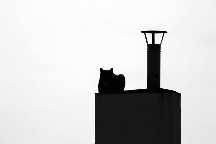 Cat on the chimney Cat BLackCat Cat On The Chimney Chimney Blackandwhite Black And White Nocolours Nocolour
