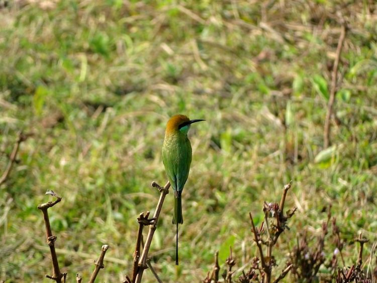 Just chillin' Bee-eater Bird Animal Wildlife Animals In The Wild One Animal Nature Perching Beauty In Nature Animal Themes Multi Colored Songbird  Close-up
