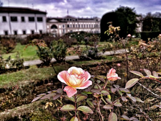 Historical Building Rose Garden Colors Of Autumn