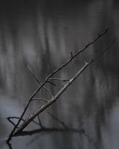 Close-up of plant growing in water