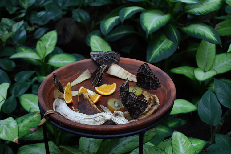 Zoo Zoo Animals  Butterfly Garden Butterfly Butterflies Banana Peel Leaf Fruit Close-up Plant Food And Drink Citrus Fruit