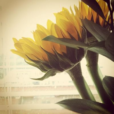 Seventh floor thunderstorms. Thunderstorms Sunflowers Hospitals Betterdays