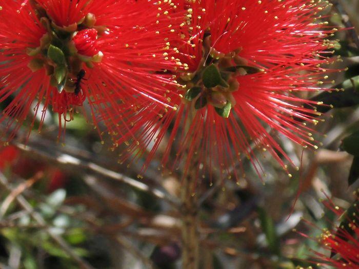 はな 花 赤い 植物 自然
