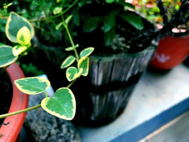 Leaf Plant Part Plant Growth Green Color Close-up Nature