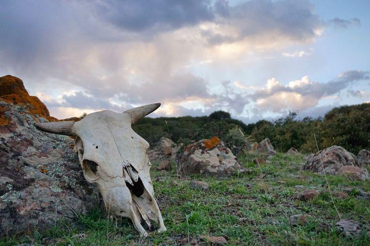 Nature Sony A6000 Sky No People Cloud - Sky Nature Outdoors Day Animal Skull Animal Themes Landscape Italy Sardinia Sony