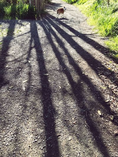 Leisurely walk Shadow Dog Outdoors Nature Trees