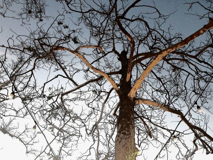 Looks like it's coming for me Tree Low Angle View Nature Branch Sky No People Outdoors Beauty In Nature Growth Bare Tree Day Backgrounds Close-up Full Frame Tree Branches Tree Of Life Tree_collection  Night Time Nature Looking Up Dark And Creepy Lights