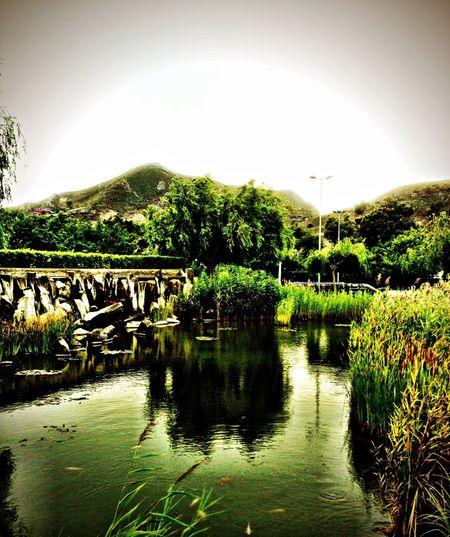 p Parque  Tenerife La Laguna Relaxing