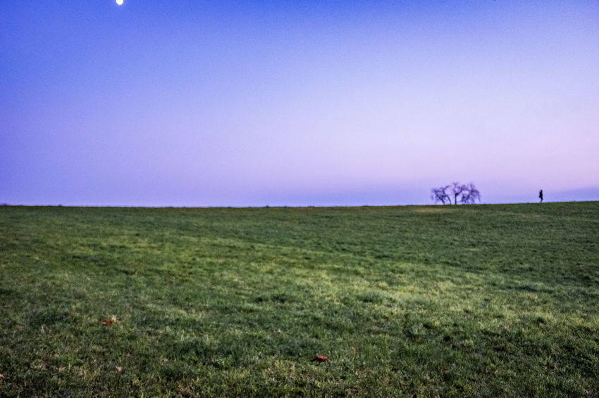 Environment Landscape Sky Grass Copy Space Horizon Over Land Horizon Nature Plant Field Land Tranquility Tranquil Scene Scenics - Nature Clear Sky No People Plain Urban Skyline Day Outdoors