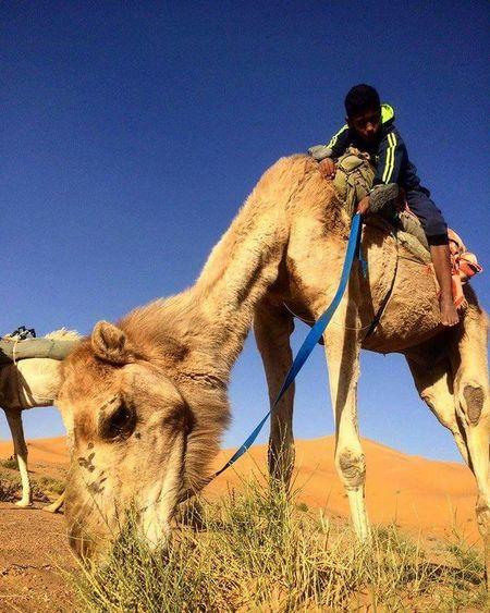 Sand Dune Clear Sky Desert Sand Riding Sky