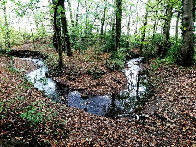 Water Arrowe Park Arrowe Brook Arrowe Country Park Growth Forest Autumn Autumn Colors Autumn Leaves Dog
