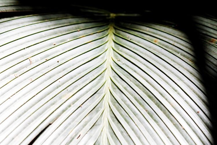Hello World Hello Seychelles Close-up Leaf Nature Paradise Fragility Palm Tree Seychellen Colorful My Point Of View Enjoying Life Taking Pictures Click Click 📷📷📷 Seychelles Travelling Seychelles Islands Beauty In Nature Nature Green Color Details Eye For Details Africa Sunlight And Shadow