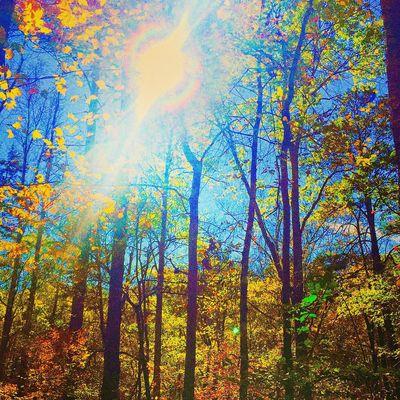 Fallcolors Fall Sunshine ☀ Sunshine EyeEmBestPics EyeEmbestshots EyeEm Nature Lover EyeEm Gallery Nature_collection Landscape_collection EyeEmNatureLover SoberLife