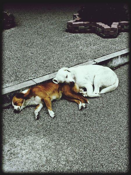 Dogs Dogs SweetLe Artistic Sleeping Sleeping Dog Sleeptime Lovely Lovely Dog Art