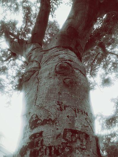 Tree ArtTree Graffiti Trees Tree Gra