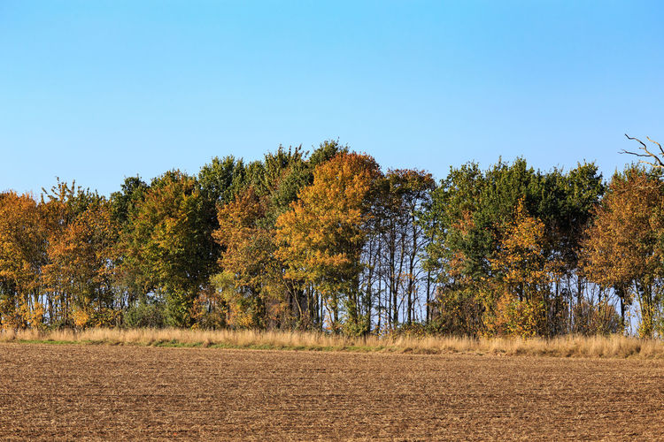 Trees in forest against clear sky during autumn