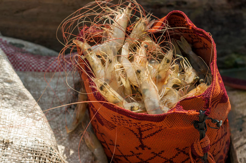 Close-up of shrimps in bag on sunny day