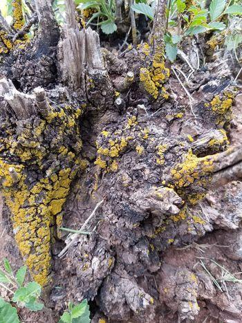 Bush Stump Mossy Outdoors Nature