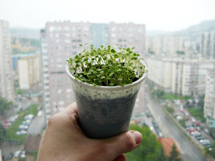 Plants are amazing. They can grow anywhere. Even in this small plastic. On a balcony that looks to the East.City Decoration Ecology Flowers,Plants & Garden Garden Garden Photography Green Healthy Eating Healthy Lifestyle Herbs Nature Photography Naturelovers Organic Food Plant Professionalphotography Salad Sarajevo Soft Light Sweet Food Urban Lifestyle Urbanphotography White Background Adapted To The City