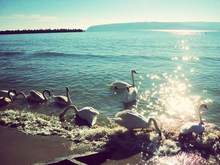 :3 ? лебеди Море обичам морето синьо небе обичам Варна 😍 😍😍❤😱👌❤