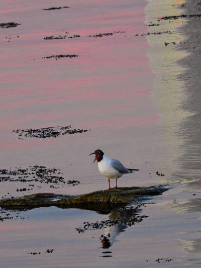 Birds on shore against sky during sunset