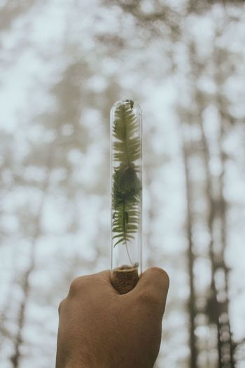 Cropped hand holding tube with leaf against trees during foggy weather