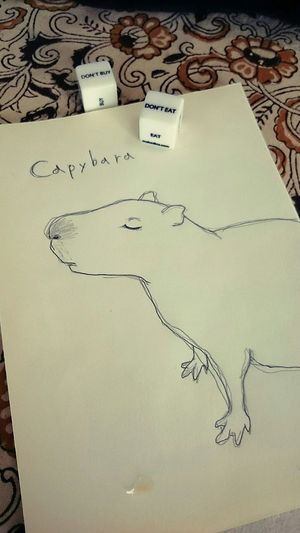 Lacgaki Painting Art Pen Drawing Capybara