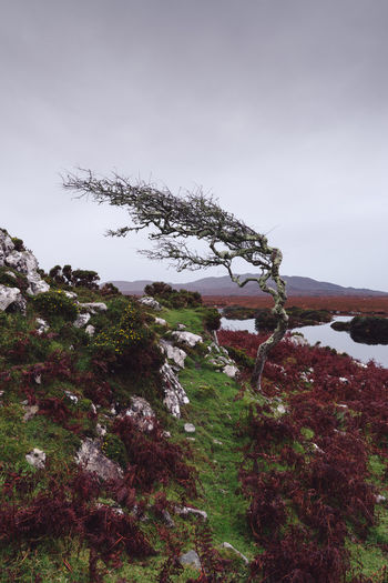 crooked tree in Connemara, Ireland Connemara Connemara National Park Connemara, Landscape, Lake, Ireland, Galway Ireland Ireland Landscapes Irish Landscape Solitude Wilderness Bog Tree Empty Road Plant Tree Sky Nature Winter Cold Temperature Snow Beauty In Nature Tranquility Day No People Tranquil Scene Scenics - Nature Cloud - Sky Mountain Land Landscape Environment Growth Outdoors