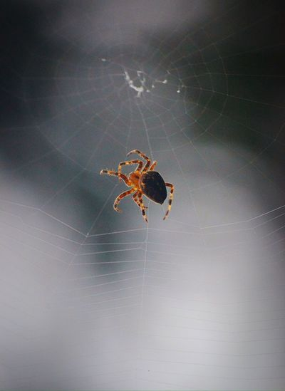 Close-up of spider on wall