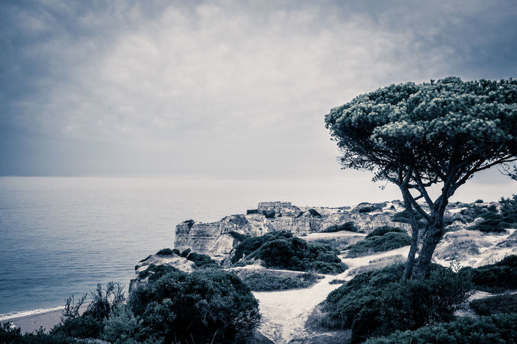 Sea Sky Nature Outdoors Water Tree Shadow Vacations Beauty In Nature Beach Landscape Coastline Portugal 35mm Film X100S Fujifilm_xseries Fujifeed Blue Water MonochromePhotography Monochromatic Monochrome Ocean Ocean View Summer Summertime