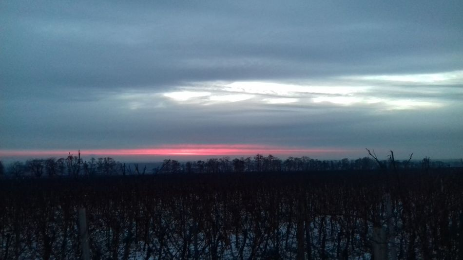 Frozen Day The Sun Found Me Staring At It Wintertime Bleeding Sky Out For A Walk Tranquility No Peoples Plant Wineyards
