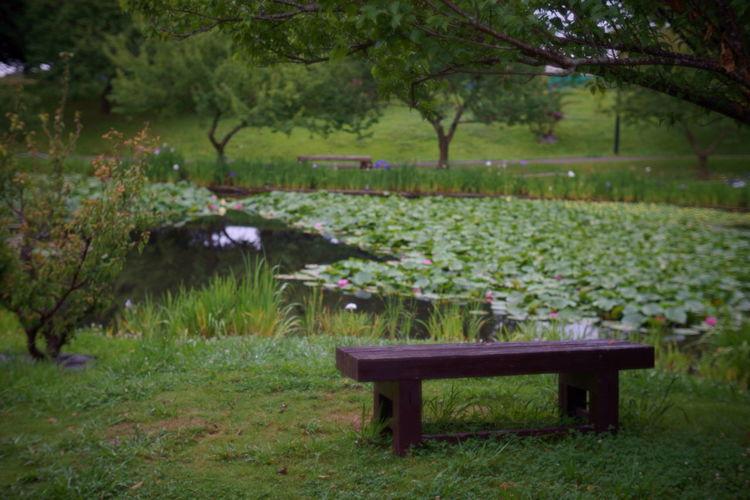 ベンチのある風景 Plant