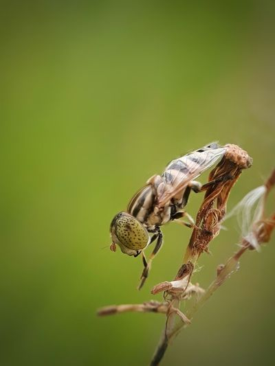 hover fly Hover
