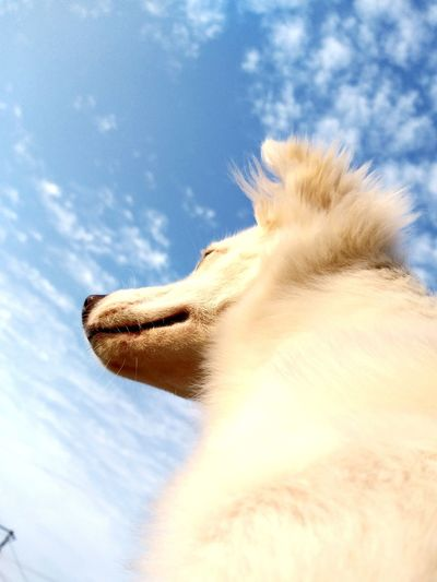 Low angle view of a horse against sky