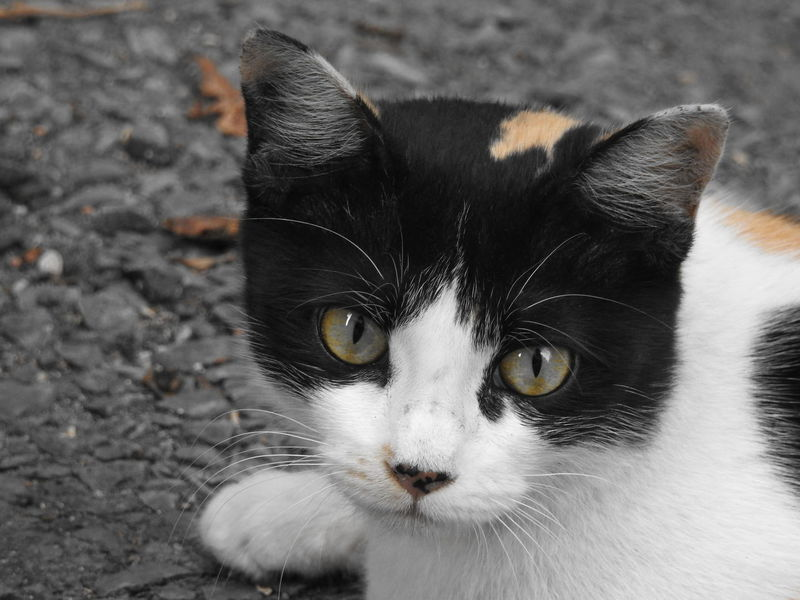 Animal Themes Black Color Cat Cat Lovers Cats Cats Of EyeEm Cat♡ Close-up Day Domestic Animals Domestic Cat Feline Looking At Camera Mammal Nature No People One Animal Outdoors Pets Portrait Whisker Yellow Eyes Pet Portraits Be. Ready. EyeEmNewHere