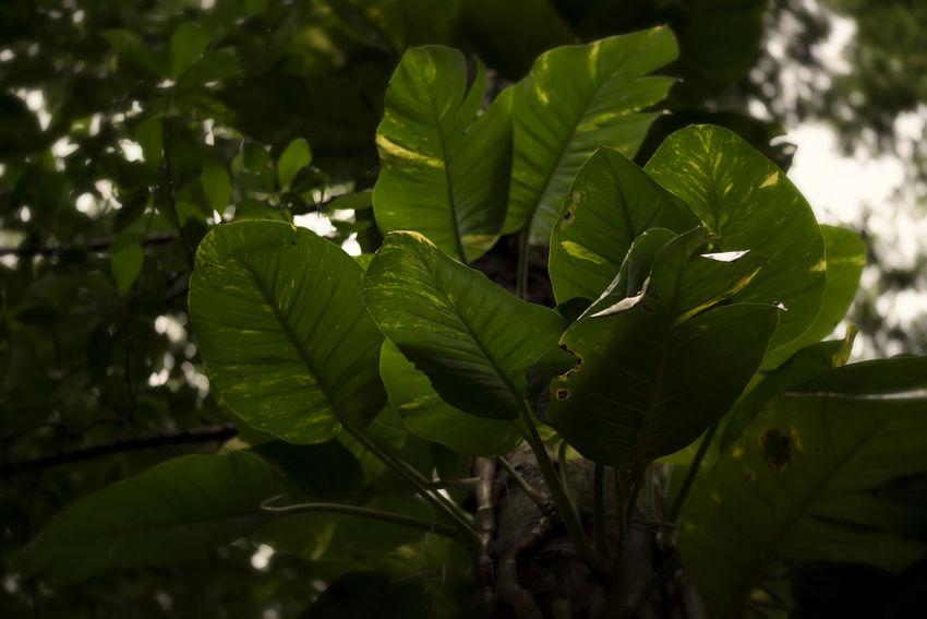 Plant Leaves Jungle Nature EyeEm Nature Lover Tree Jardim Botânico Rj Light And Shadow