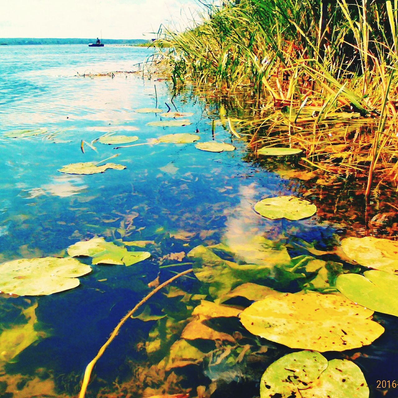 water, nature, floating on water, leaf, beauty in nature, lily pad, tranquility, outdoors, water lily, reflection, day, lake, floating, waterfront, no people, standing water, tranquil scene, water plant, scenics, growth, plant, lotus water lily, close-up