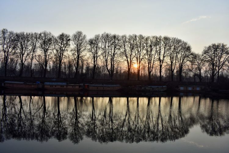 Reflection of Chinars add to the beauty of world famous Dal Lake near the Chinar Bagh in Srinagar Dallake Kashmir , India Water Tree Lake Silhouette Reflection