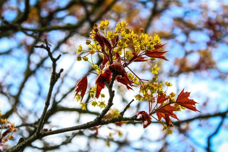 Nature Growth Fragility Close-up Low Angle View Beauty In Nature Branch Tree Flower Outdoors No People Day Freshness Flower Head