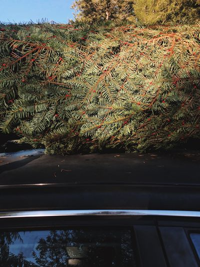 View of trees seen through car window