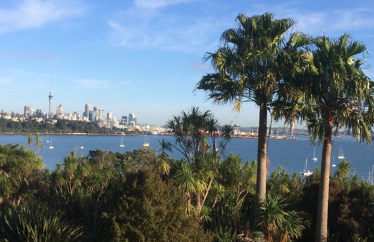 You only lose what you cling to. Livistona australis Palm Trees Cityscape Sky Sea Beach Architecture Springtime Pacific Ocean Blue Beautiful Day Flowers,Plants & Garden New Zealand Impressions Auckland City Boats⛵️