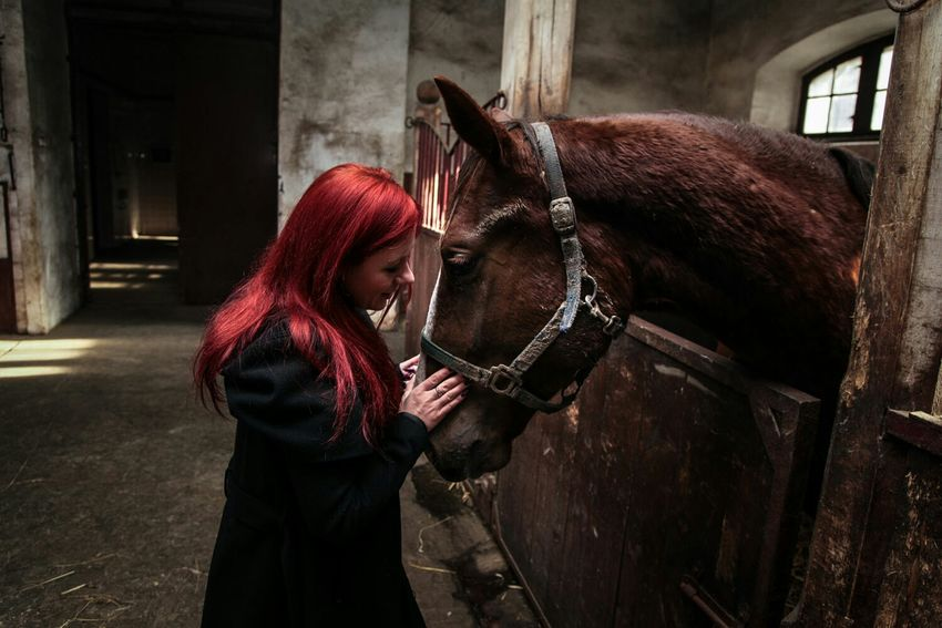 Horses Redhair Redhead I Love Horses Beautiful Animals  Animals Animal Photography Relaxing Me And My Frend  Polishgirl EyeEmBestPics Eyemphotography Animal Love
