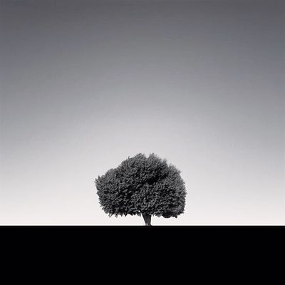 EyeEm Best Shots - Nature EyeEm Best Shots - Black + White Monochrome Fine Art Photography Fineart_photobw Blackandwhite Black & White EyeEm EyeEm Nature Lover