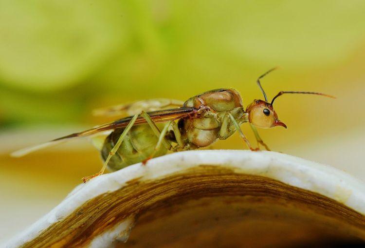 invertebrate