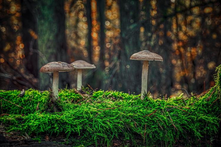 Close-up of mushroom in forest