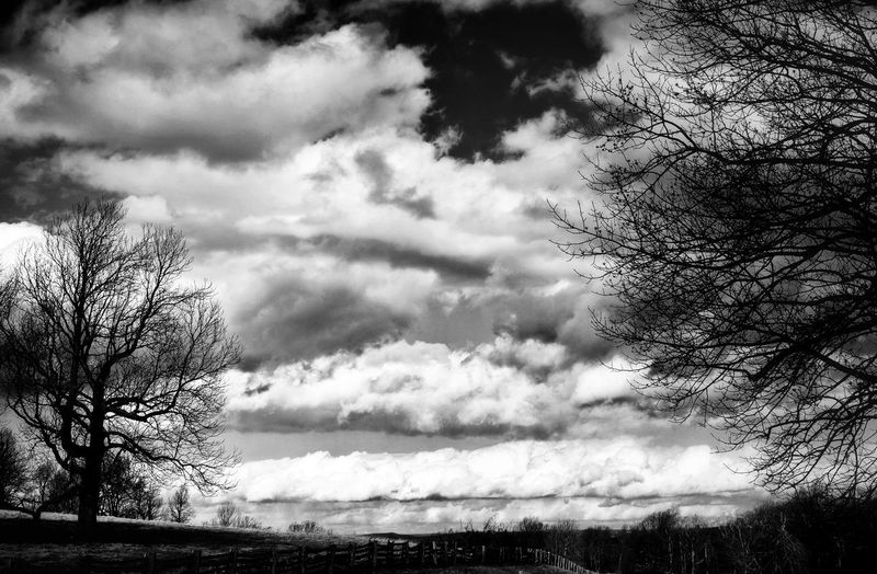 Storm clouds over trees against sky