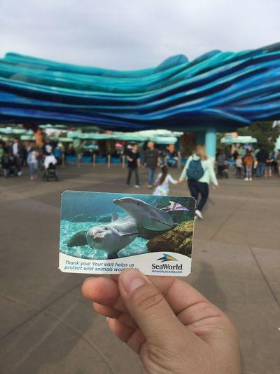 🐳Again i have Annual Pass of Sea World 🐳 Sea Animal Sea Life Aquarium Life Aquarium Seaworld San Diego Seaworld