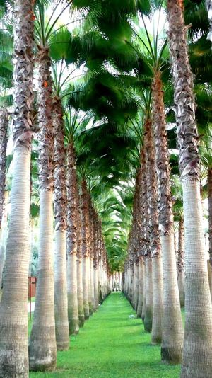Digital composite image of palm trees in park