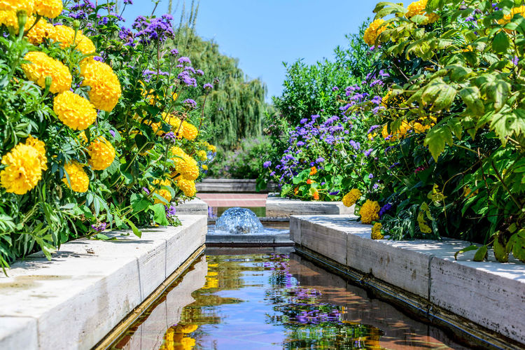 Water Feature Beauty In Nature Day Flower Freshness Garden Growth Landscaping Nature Outdoors Plant Water Water Fountain Waterfront