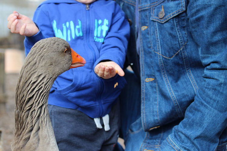 Close-up of boy with father feeding goose